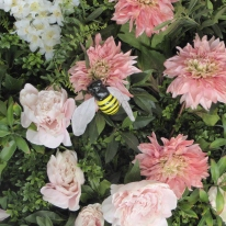 A bee buzzing on Nikki Tibbles wild English flowers